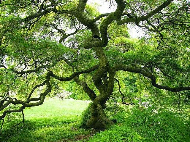 Permakültür ve Bitki Kardeşlikleri