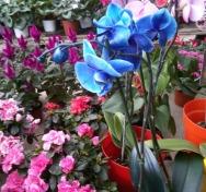 Anneler Günü İçin Mis(!) Gibi Kimyasal Kokan Çiçekler