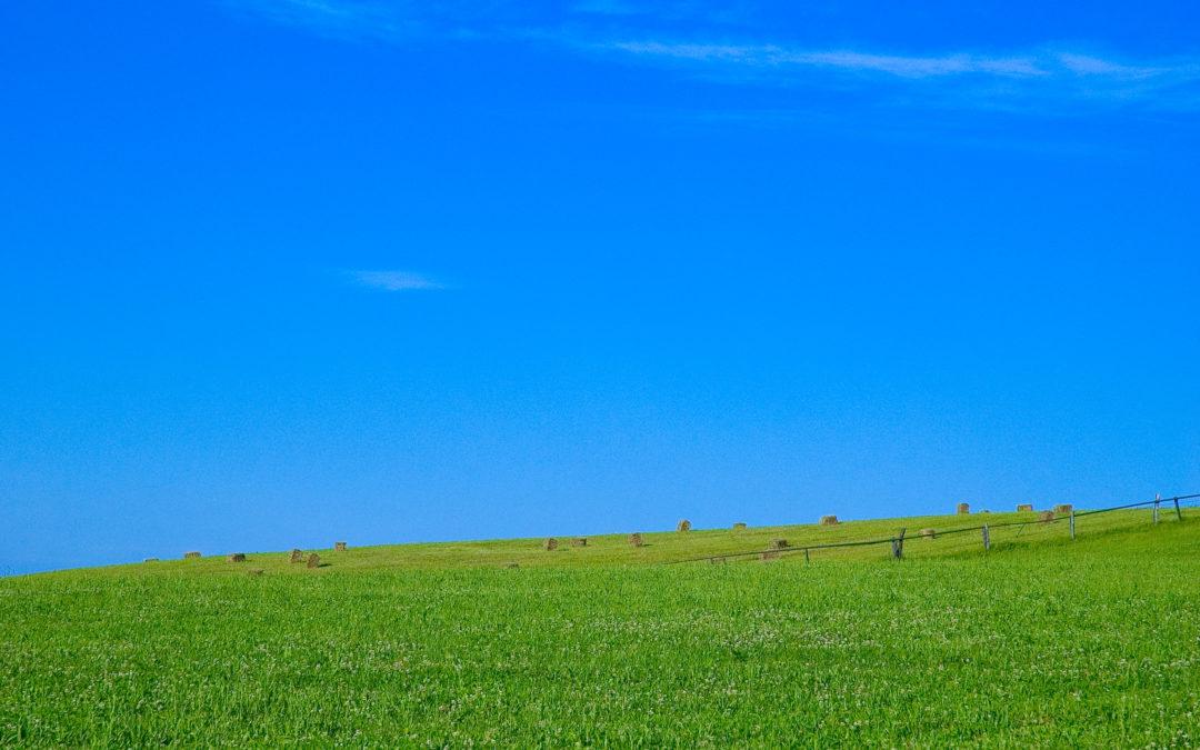 Permakültür Uygulamalarına Örnekler 1 – Belentepe Permakültür Çiftliği
