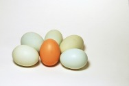 İblisin Yumurtaları