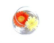 Topraksız Çiçekler