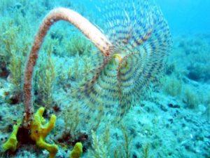denizlerin-korunmasi-ii