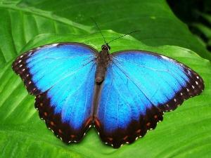 Bir Kelebeğin Kanatları