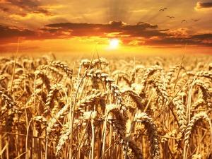 Gıda İntoleransı ve Omega 3 Nedir?